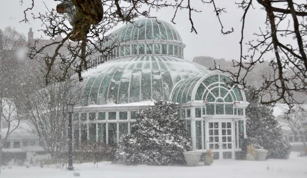 Brooklyn Botanic Garden Is Offering Free Admission All Winter