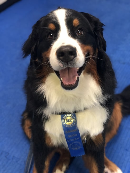 This Nyc Pup Just Became The Millionth Dog To Receive Her