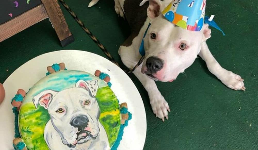 Superb This Brooklyn Bakery Will Make A Birthday Cake With Your Dogs Personalised Birthday Cards Veneteletsinfo