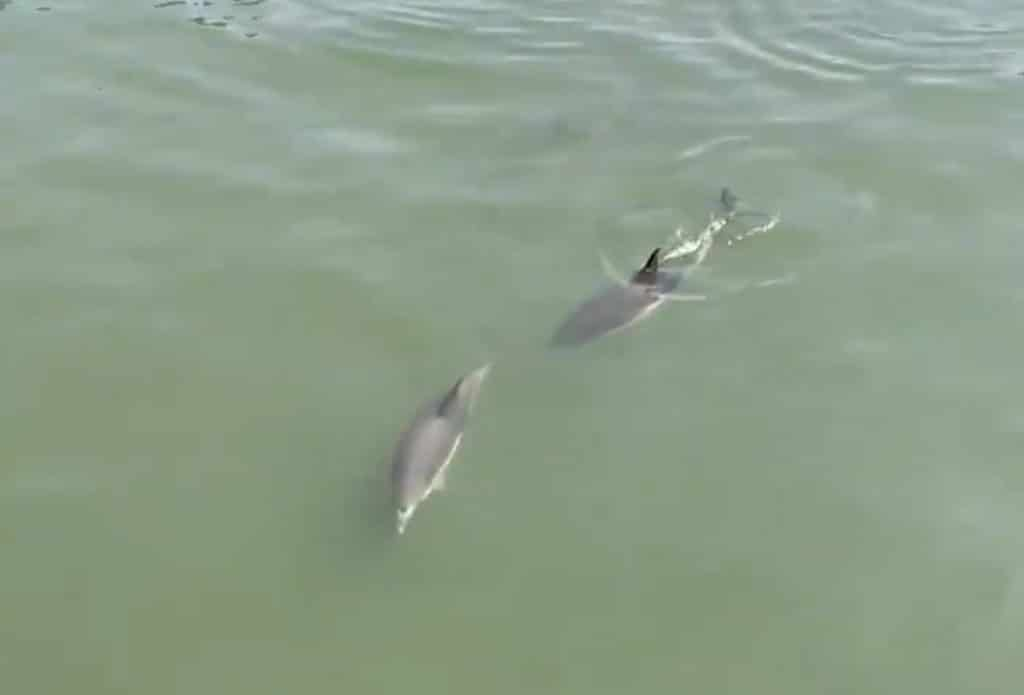 A Trio Of Dolphins Was Just Spotted In The East River