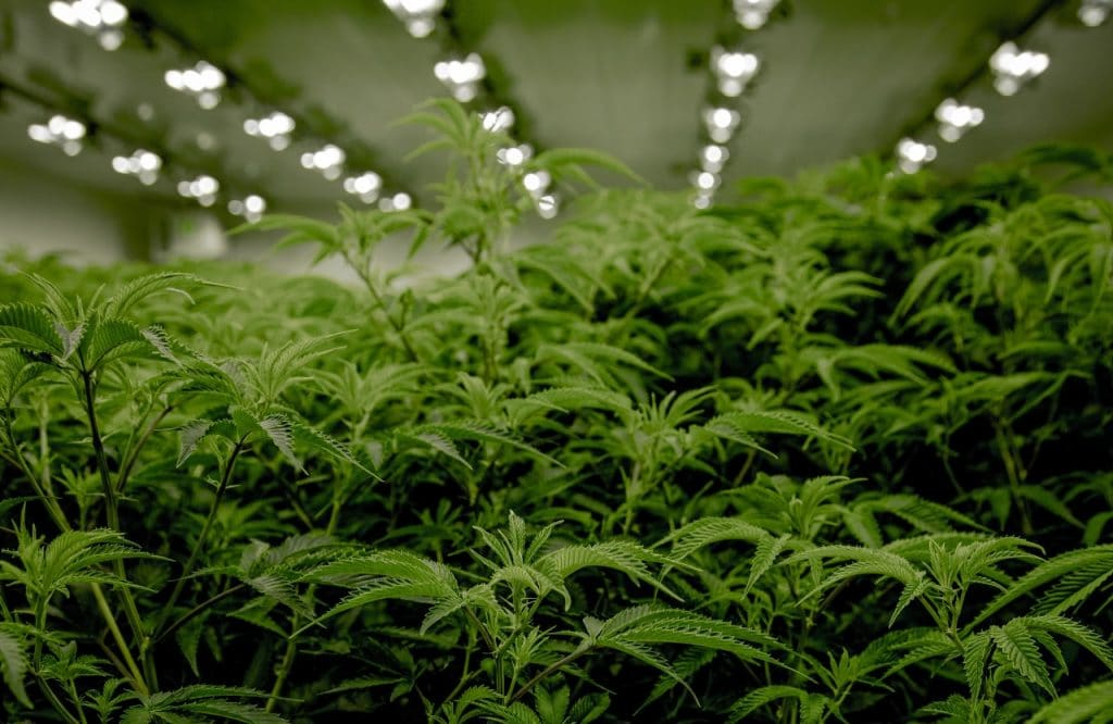 The State Of New York Has Now Officially Legalized Recreational Marijuana