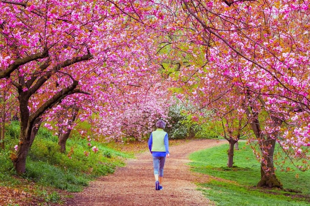 21 Stunning Photos Of Cherry Blossoms Currently Taking Over NYC Parks