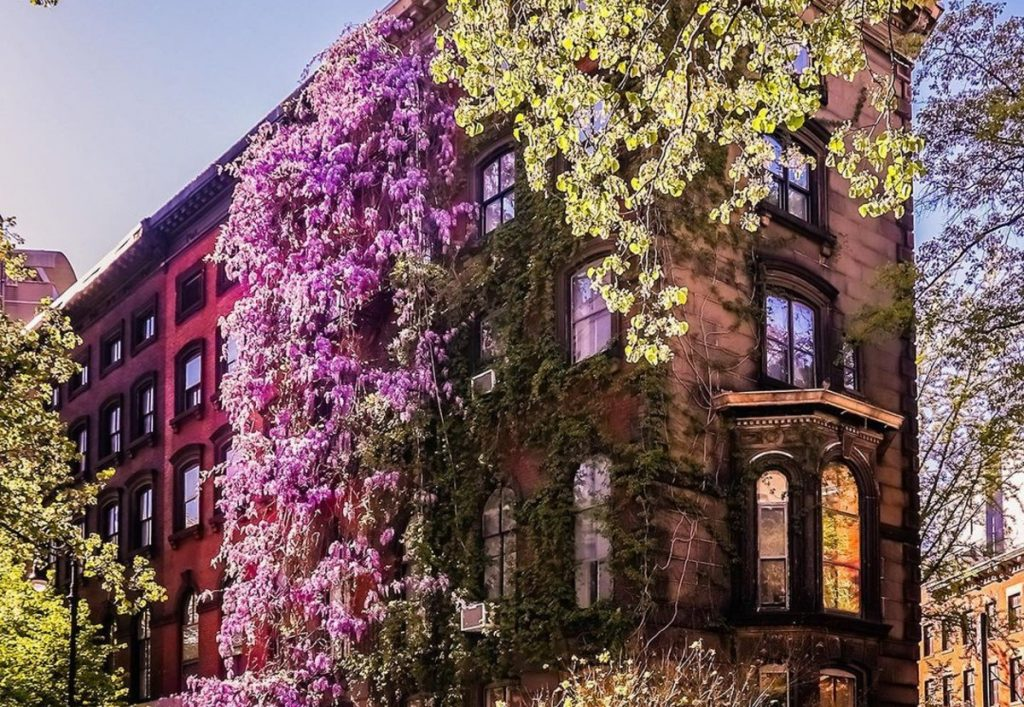 10 Gorgeous Photos Of Wisteria Blooming Around NYC Right Now