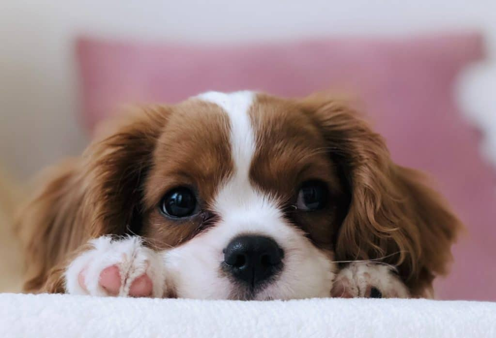 The NY Senate Just Passed A Bill To End The Retail Sale Of Puppies