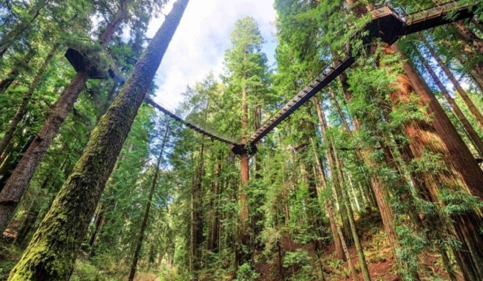 This Incredible New Skywalk In California Puts You On The Same Level As The Redwoods
