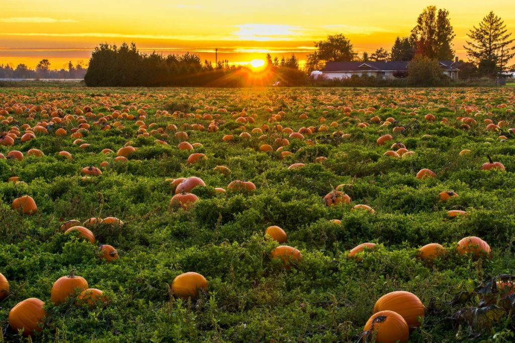 10 Places To Go Pumpkin Picking Near NYC This Fall