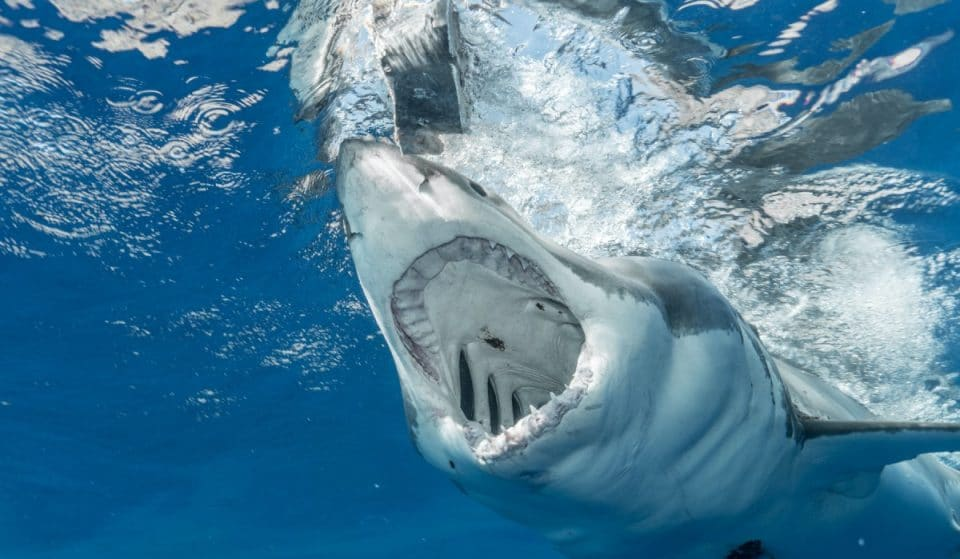 An Insane Shark Exhibit Is Coming To The Museum Of Natural History This Winter